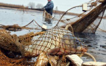 Охотничий госинспектор браконьерствовал в нерест на Можайском водохранилище