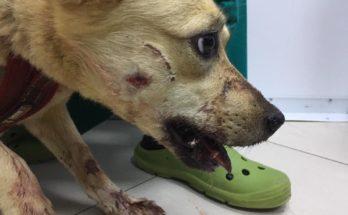 В Можайском районе пенсионера обвиняют в расстреле собак