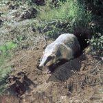 Можайский район — место обитания всевозможных животных