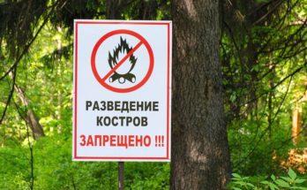 Полиция просит жителей воздержаться от разведения костров в лесу