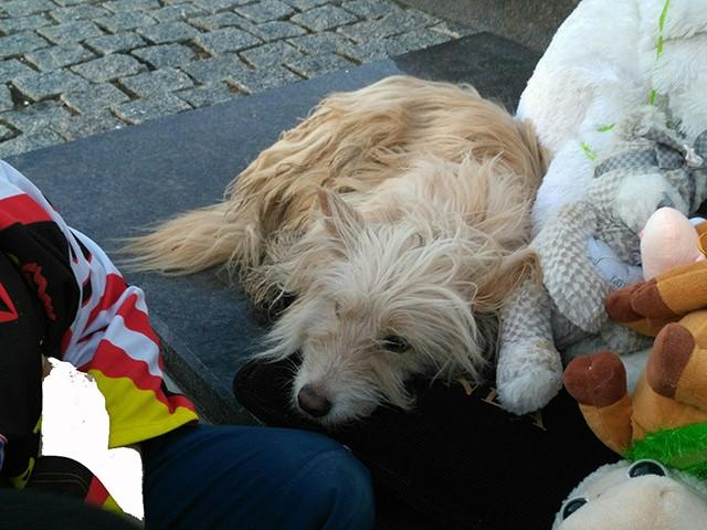 Бездомный пёс скорбит со всеми по погибшим в Кемерово